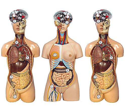 The body's clockwork - 1